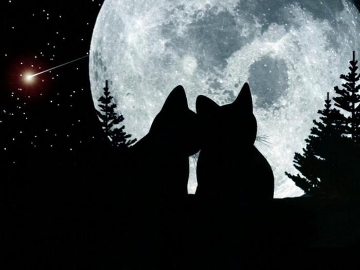 кошки под луной картинки деревня тупиковая, здесь